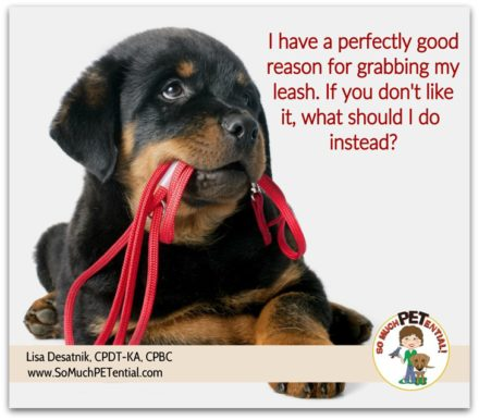 how to prevent and stop your dog from biting and tugging on the leash
