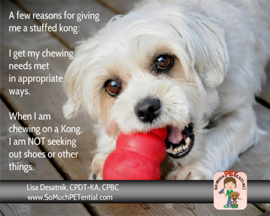 Giving your dog a stuffed kong or other food activity toy has so many benefits.