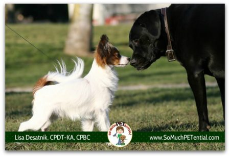 Does your dog pull on leash to greet another dog? Or is your dog reactive to dogs on leash? A discussion about on leash greetings, and dog training solutions.
