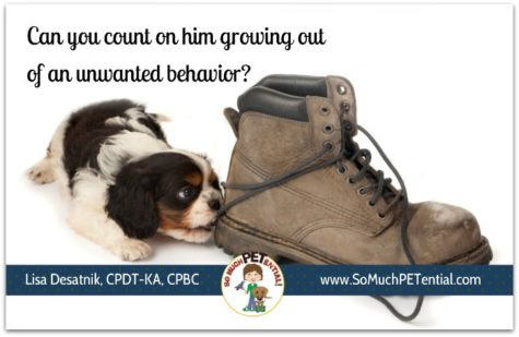 Do puppies grow out of problem behaviors? Yes and no. Cincinnati certified dog trainer Lisa Desatnik answers.