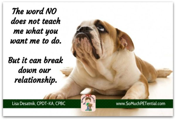 Reasons why you should not use punishment in dog training