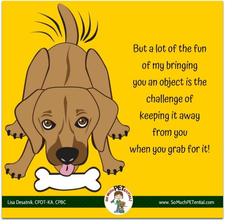 Are you teaching your dog behaviors you do not like?