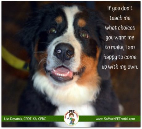 choices in dog training