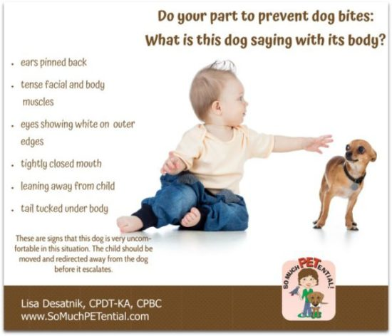 children and dogs: dog bite prevention. Do you know what this dog's body language is saying?