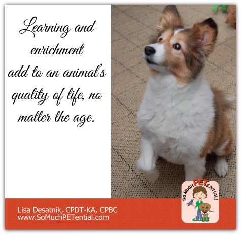learning and enrichment add to your dog's quality of life, no matter the age