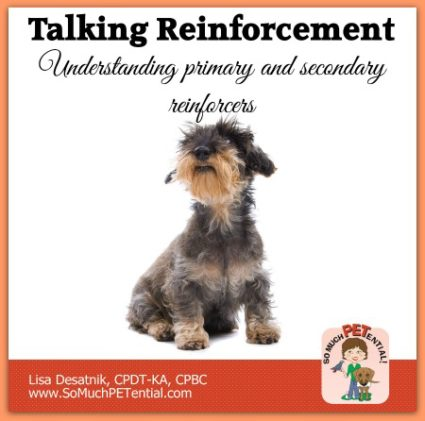 understanding primary and secondary reinforcers in dog training
