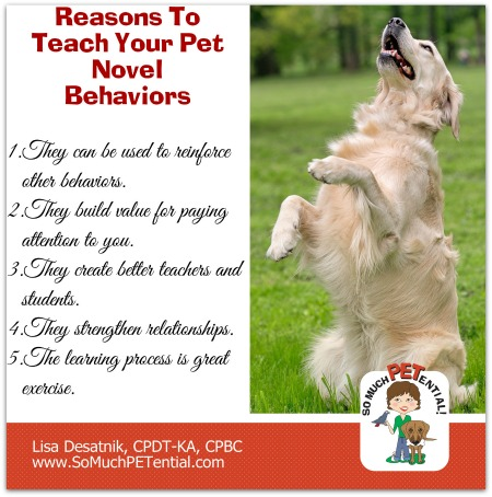 Five Reasons To Teach Your Dog Trick Behaviors