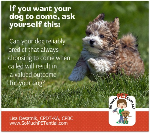 A reminder about teaching your dog a reliable recall.