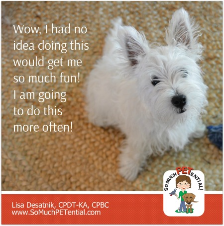 This West Highland Terrier puppy learned to sit for a calm greeting instead of with punishment. Cincinnati Certified Dog Trainer, Lisa Desatnik, CPDT-KA, explains.
