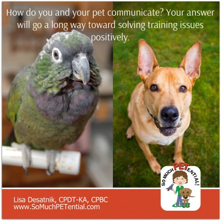 How do you and your pet communicate? How you answer that question will go a long way toward helping train your dog or bird (or other pet) in the most positive way.