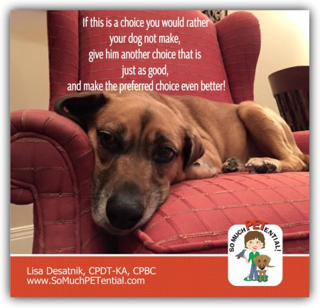 Cincinnati Certified Dog Trainer Lisa Desatnik, CPDT-KA, has tips for stopping your dog from getting onto furniture.