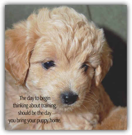 The time to begin thinking about training your puppy is the day you bring your puppy home. Cincinnati Certified Dog Trainer, Lisa Desatnik, CPDT-KA, offers in home puppy training.