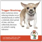 Trigger Stacking In Dogs