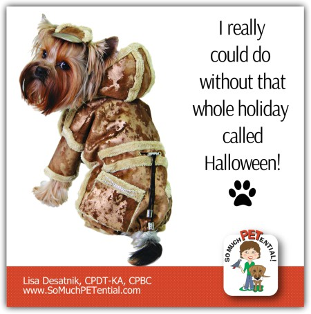 What Dogs Dislike About Halloween