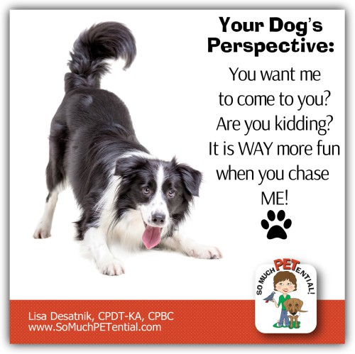 Are you Teaching Your Dog To Run Away?