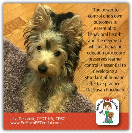 Cincinnati Certified Dog Trainer Lisa Desatnik, CPDT-KA, talks about the importance of empowerment in dog training, and how she solved a leash problem with a puppy.
