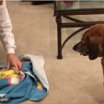 Find It Scent Game With A Towel for Dogs