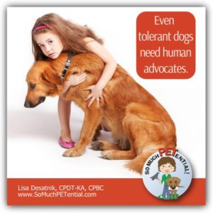 Tolerant dogs will still bite if pushed and their dog body language is not listened to. Certified Dog Trainer Lisa Desatnik, CPDT-KA, CPBC, talks about tolerance in dogs, why they still need advocates, and what you can do to help them succeed.