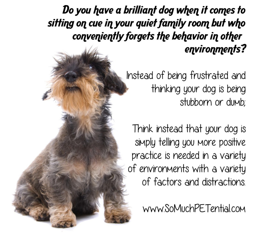 Building Brilliance Through Dog Training | | So Much PETential