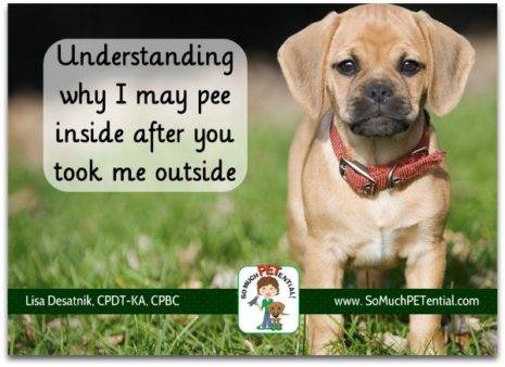Why puppies pee inside so much petential some potential reasons why your puppy may be peeing in your house and how to m4hsunfo